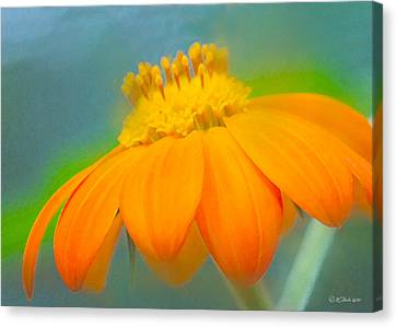 Evening Orange Greeting Card Canvas Print by William Martin