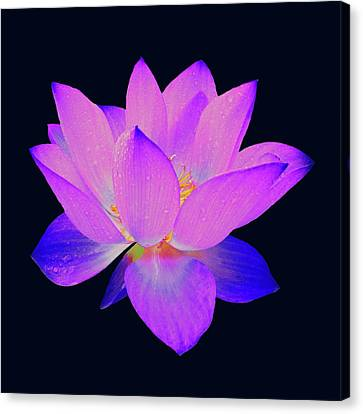 Canvas Print featuring the painting Evening Purple Lotus  by David Dehner