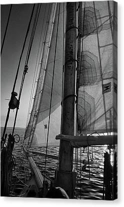 Evening Sail Bw Canvas Print