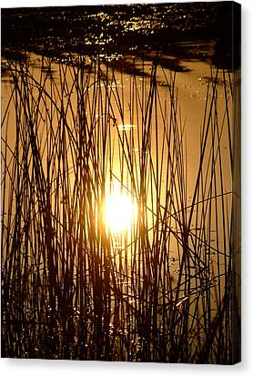 Evening Sunset Over Water Canvas Print