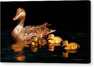 Ducklings Canvas Print - Evening Swim by Thanh Thuy Nguyen