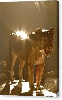 Evening's Light Canvas Print by Laddie Halupa