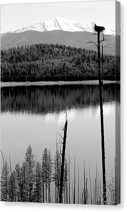 Ever Watchful Canvas Print by Nicholas Miller