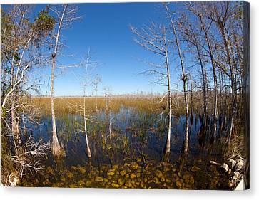 Everglades 85 Canvas Print by Michael Fryd