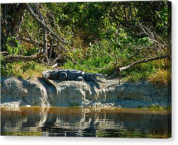 Everglades Crocodile Canvas Print by David Lee Thompson