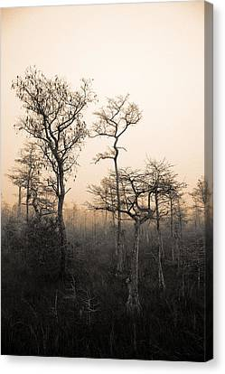 Canvas Print featuring the photograph Everglades Cypress Stand by Gary Dean Mercer Clark