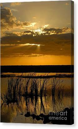 Everglades Evening Canvas Print by David Lee Thompson