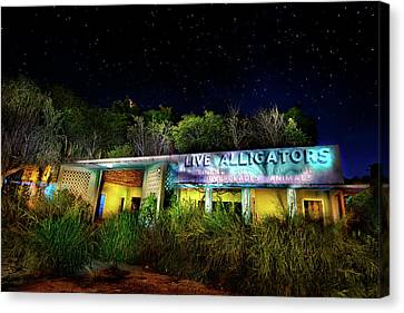 Everglades Gatorland Canvas Print by Mark Andrew Thomas