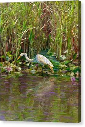 Everglades Hunter Canvas Print by David  Van Hulst