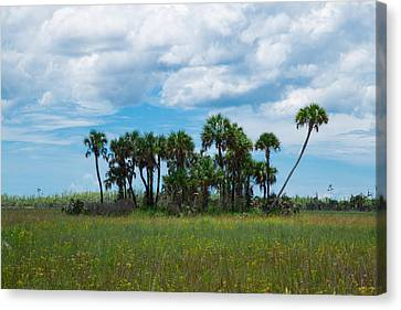 Everglades Landscape Canvas Print by Christopher L Thomley