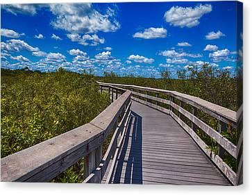 Everglades Trail Canvas Print
