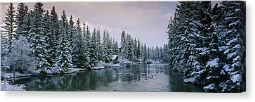 Evergreen Trees Covered With Snow Canvas Print by Panoramic Images