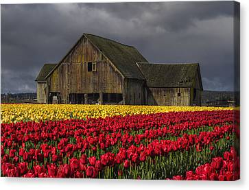 Everlasting Blooms Canvas Print by Mark Kiver