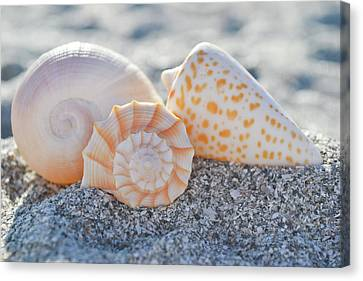 Canvas Print featuring the photograph Every Shell Has A Story by Melanie Moraga