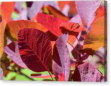 Canvas Print featuring the photograph Everything Is Extraordinary by Linda Lees