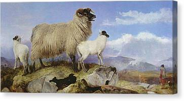Ewe And Lambs Canvas Print