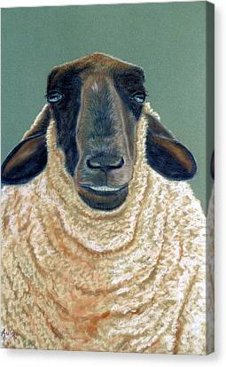 Ewe Move Me Baby Canvas Print by Jan Amiss