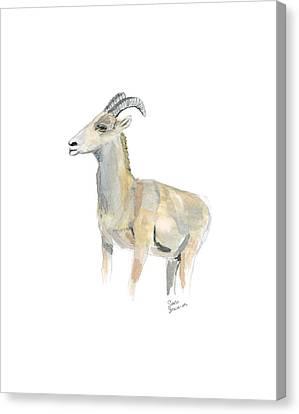 Ewe Canvas Print