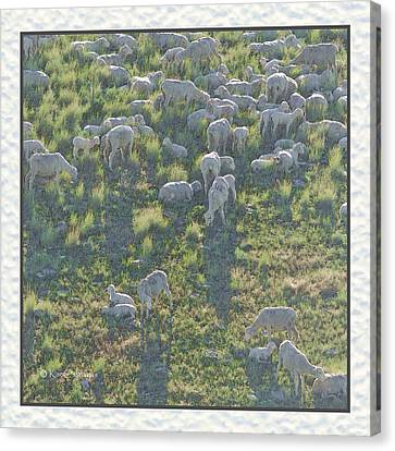 Ewes And Lambs - Digital Painting Canvas Print by Kae Cheatham