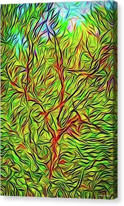 Exaltation Of Springtime Canvas Print