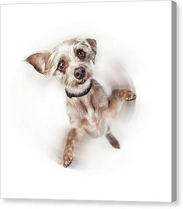 Excited Dog Spinning With Motion Blur Canvas Print by Susan Schmitz