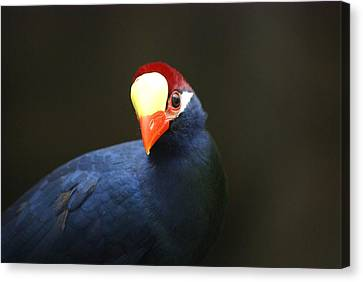 Canvas Print featuring the photograph Exotic Bird by Heidi Poulin
