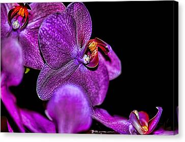 Canvas Print featuring the photograph Exotic by Diana Mary Sharpton