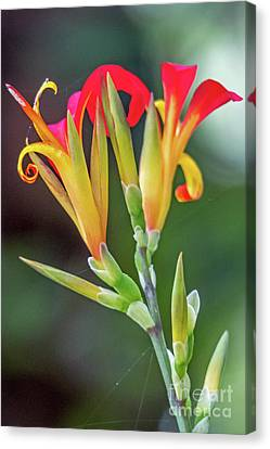 Exotic Flowers Canvas Print by Kate Brown