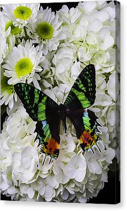 Butterflies Canvas Print - Exotic Green Butterfly by Garry Gay
