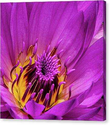 Canvas Print featuring the photograph Exotic Hot Pink Water Lily Macro by Julie Palencia