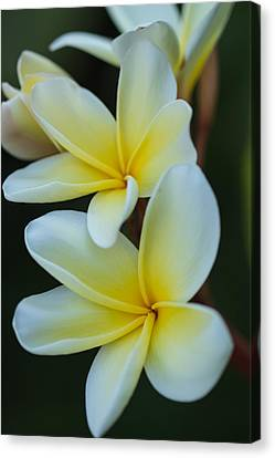 Canvas Print featuring the photograph Exotic by Julie Andel