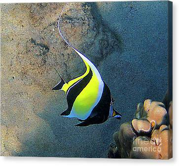 Exotic Reef Fish  Canvas Print