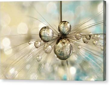 Canvas Print featuring the photograph Exploding Dandy Drops by Sharon Johnstone