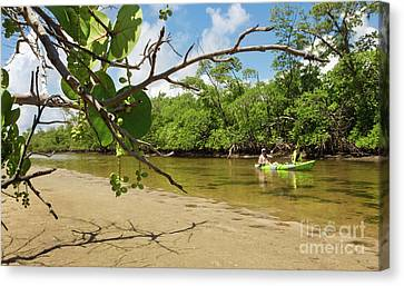 Mangrove Forest Canvas Print - Exploring South Florida's Wilderness - Father And Son Kayaking by Matt Tilghman