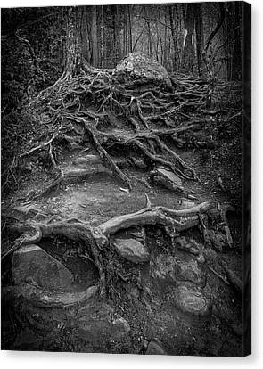 Canvas Print featuring the photograph Exposed Roots by Alan Raasch