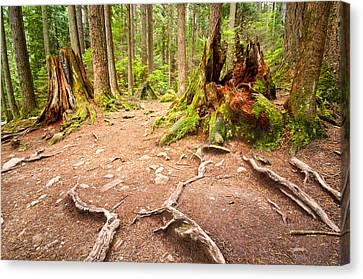 Exposed Roots Canvas Print by Emilio Lovisa