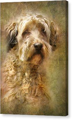 Puppy Canvas Print - Expression by Trudi Simmonds