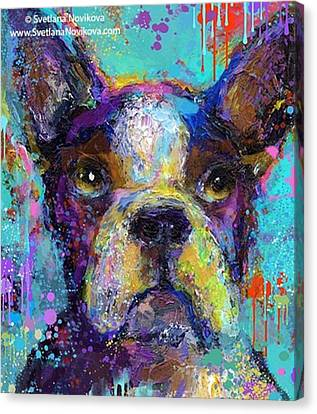 Impressionism Canvas Print - Expressive Boston Terrier Painting By by Svetlana Novikova