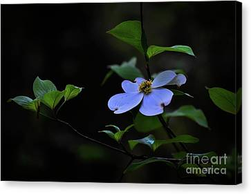 Canvas Print featuring the photograph Exquisite Light by Skip Willits
