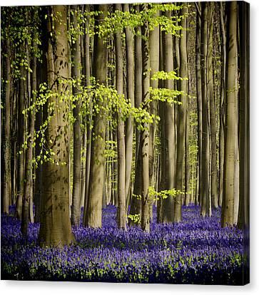 Forest Floor Canvas Print - Exuberance by Studio Yuki