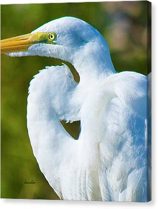 Eye-catching Canvas Print