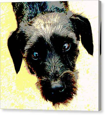 Eye Contact Canvas Print by Dorrie Pelzer