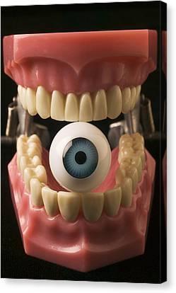 Seeing Canvas Print - Eye Held By Teeth by Garry Gay