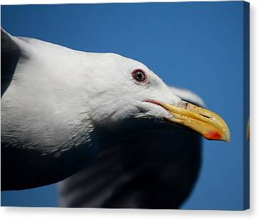 Canvas Print featuring the photograph Eye Of A Seagull by Sumoflam Photography