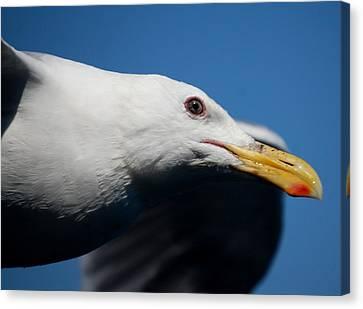 Eye Of A Seagull Canvas Print