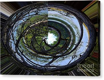 Eye Of A Tree Canvas Print by Patti Whitten