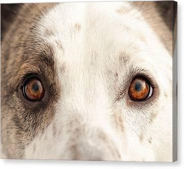Eye Of The Dog Canvas Print by Debi Bishop