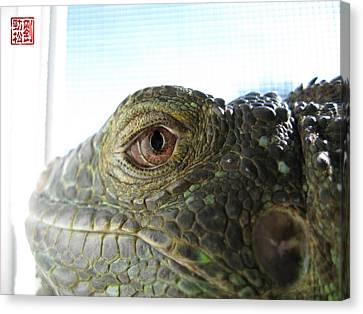 Eye Of The Dragon Canvas Print