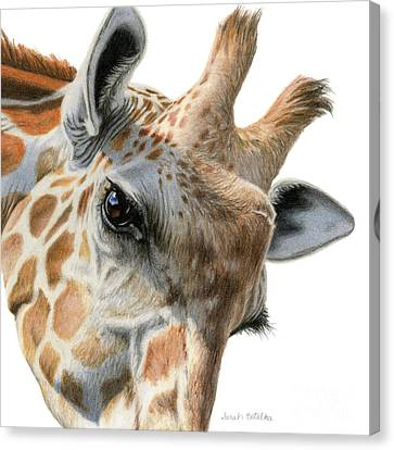 Eye Of The Giraffe Canvas Print