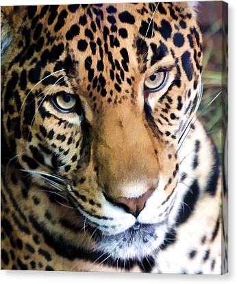 Eye Of The Leopard Canvas Print by Athena Mckinzie